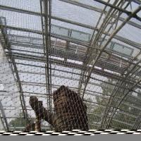 ZOO Praha – výměna sítí v pavilonu Indonéská džungle